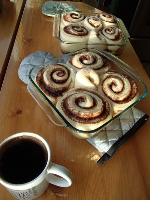 Fresh home-made cinnamon rolls just out of the oven
