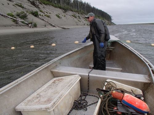 Back out shaking eulachon instead of salmon,  with one net already pulled
