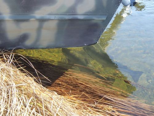 Two bucks hiding under the back end of Tanis' skiff where it hangs over the water