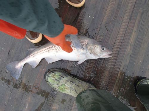 A victim of Family Fishing Day at the Yakutat Boat Harbor