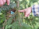 Robbin Nest_3